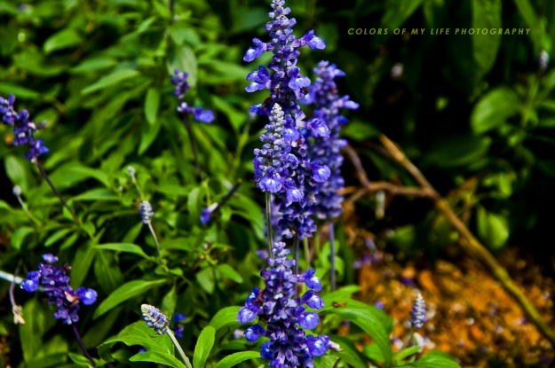 Malaysia - Cameroon Trip - Lavender garden