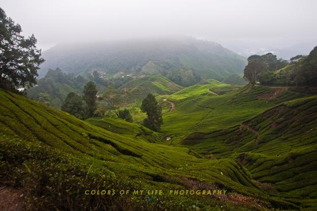 Malaysia - Cameroon Trip - Lavender garden_1