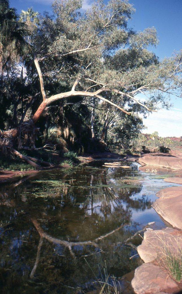 Palm Valley CDT81009
