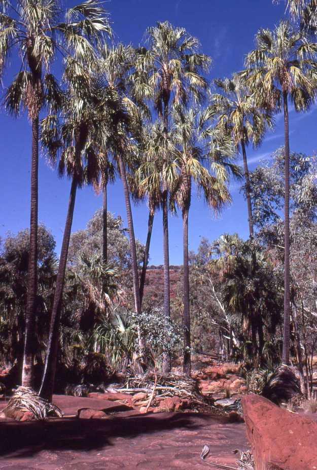 Palm Valley CDT81012-2