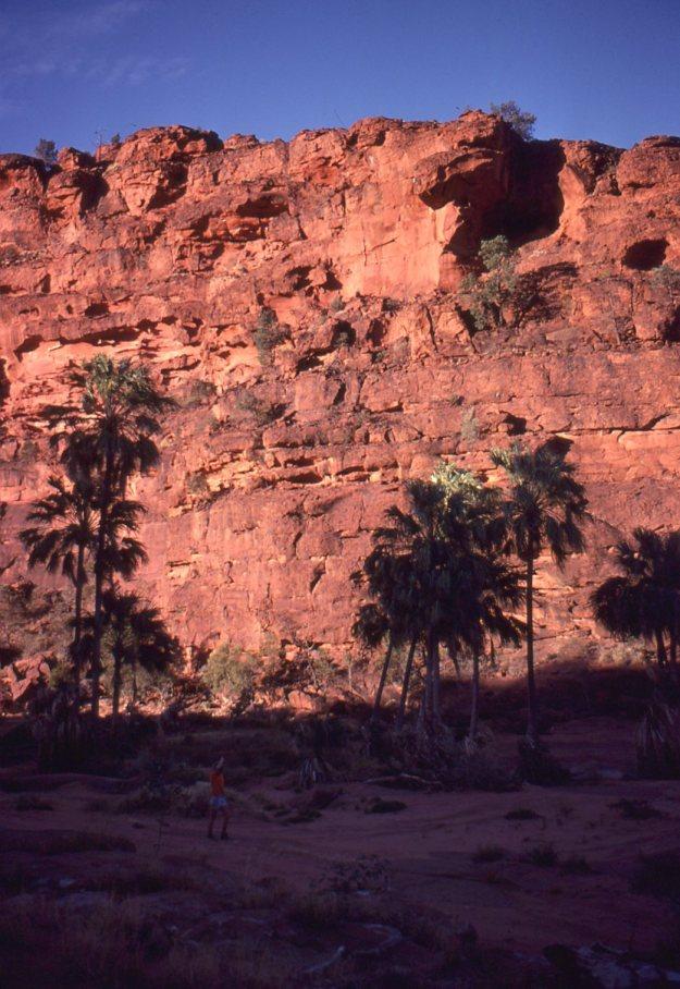 Palm Valley CDT81013