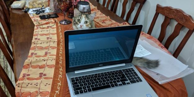 Tech-Cat