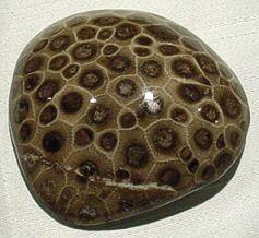 polished petoskey stone