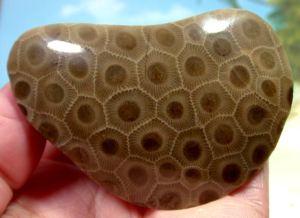 a polished petoskey stone